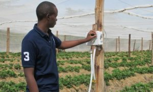 Agri-business-in-Kenya